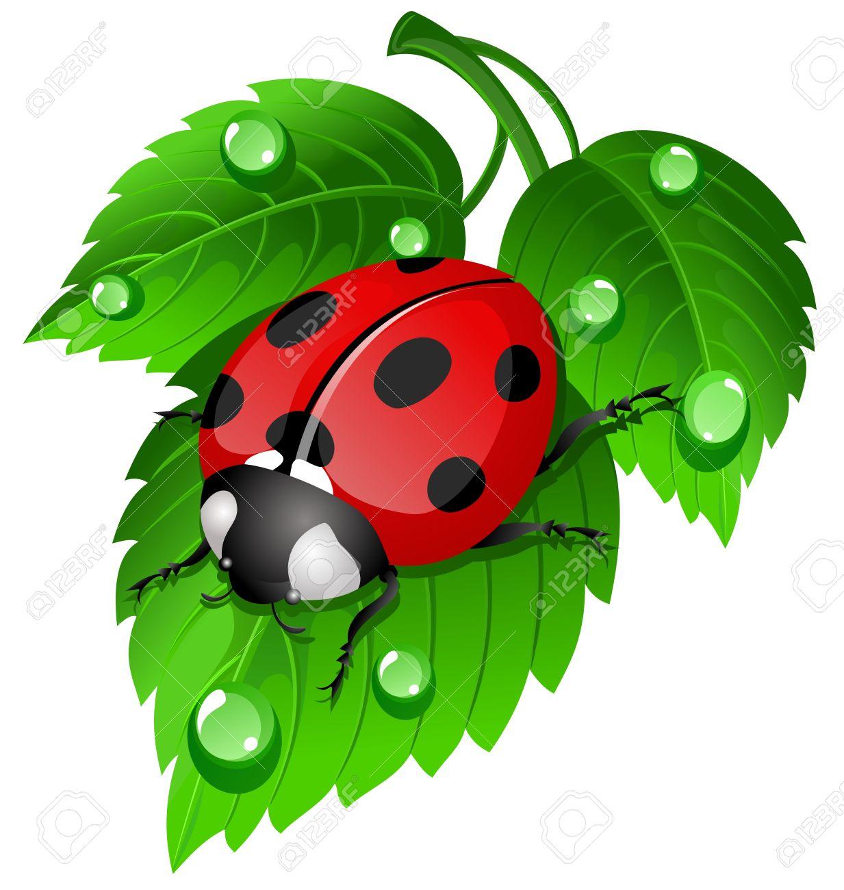 ladybug on leaf.
