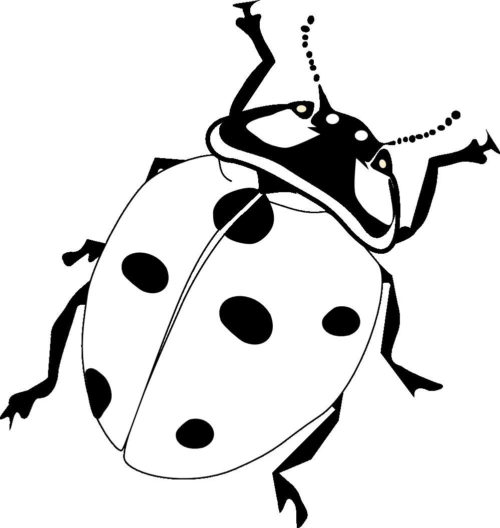 Black And White Ladybug Clipart.