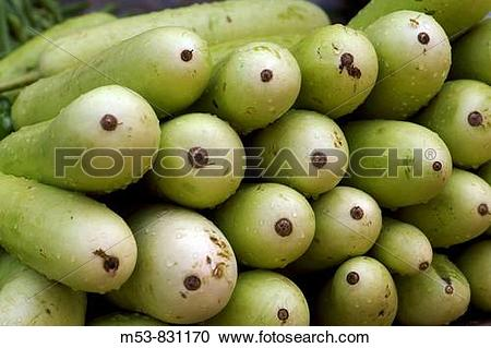 Stock Photography of bottle gourd lagenaria siceraria on sale in a.