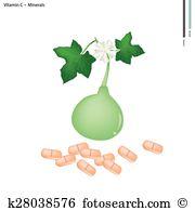 Lagenaria siceraria Clipart and Illustration. 9 lagenaria.