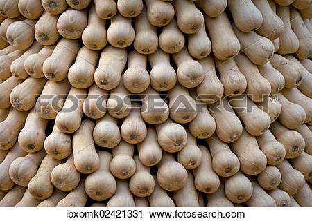"Stock Photography of ""Bottle gourds, opo squashes or long melons."