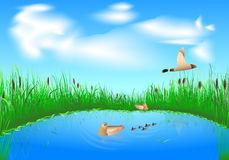 Patinhos No Lago Ilustrações, Vetores E Clipart De Stock.