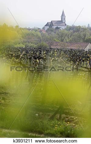 Stock Photography of Vineyards and village church at Lake Balaton.