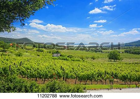 Pictures of A panoramic view over the wine.