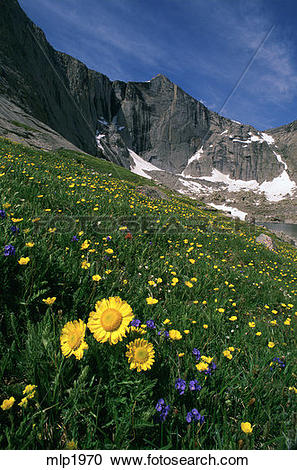 Stock Photography of Wildflowers in Upper Cathedral Lake Basin.
