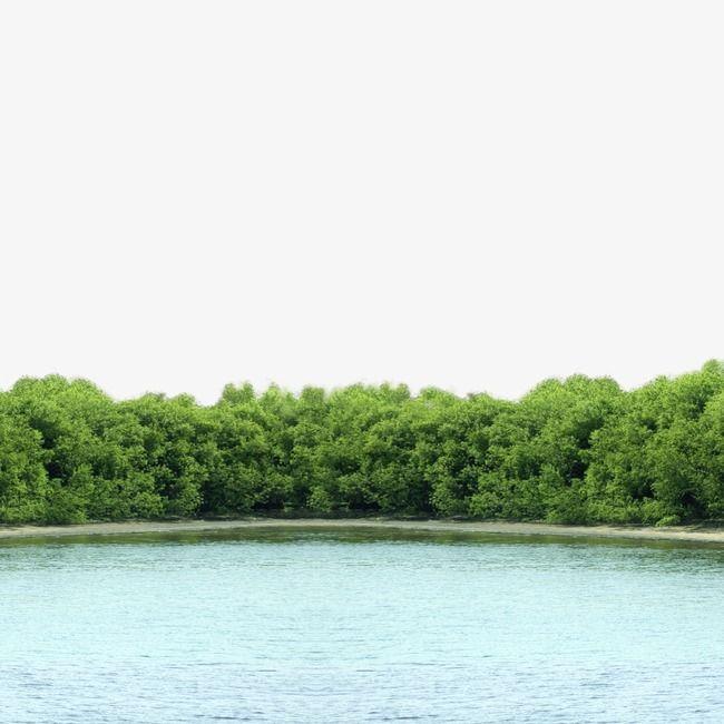 منظر البحيرة.