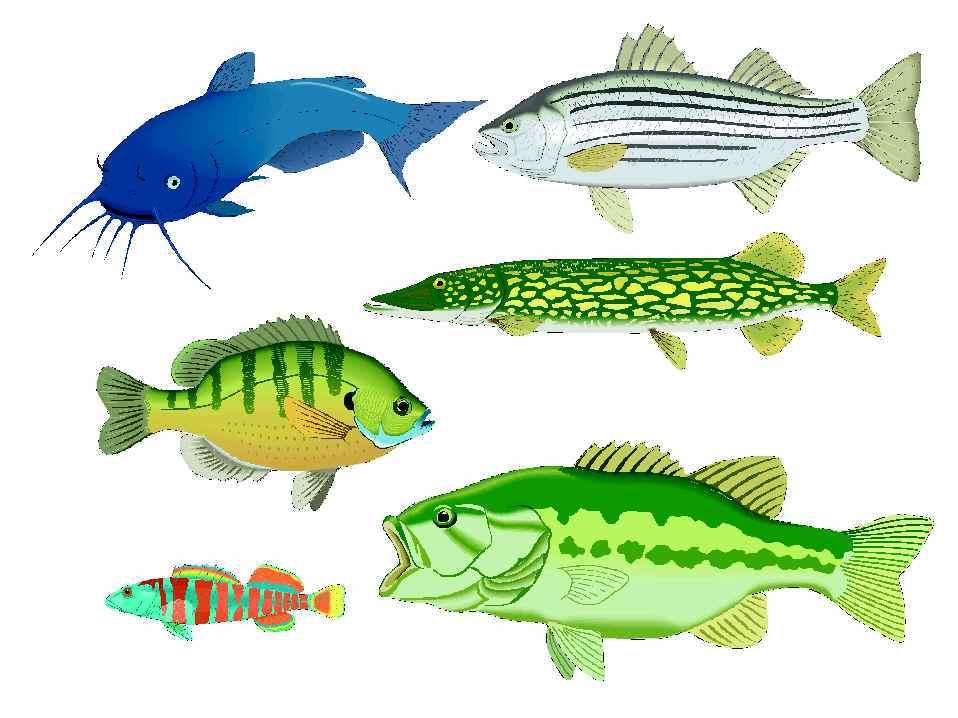 Lake fish clipart » Clipart Portal.