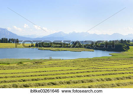 """Stock Images of """"Illasbergsee lake, part of Forggensee Lake."""