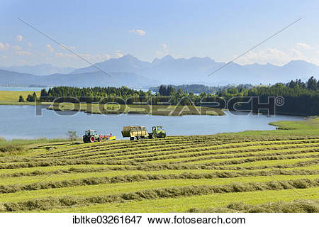 """Picture of """"Illasbergsee lake, part of Forggensee Lake, Hopfensee."""