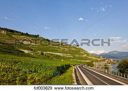 Stock Photograph of Switzerland, Lausanne, View of vineyards at.
