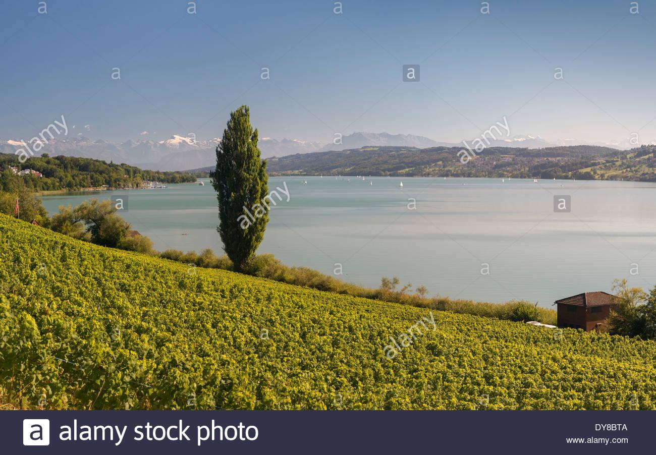 Aargau View Mountain Panorama View Hallwilersee Lake Hallwil.