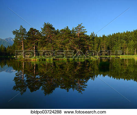 "Pictures of ""Conifer forest reflected in lake Moserer See, near."