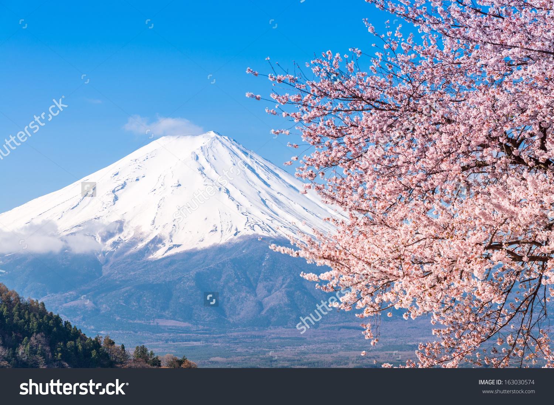 Mt Fuji Cherry Blossom Lake Kawaguchiko Stock Photo 163030574.