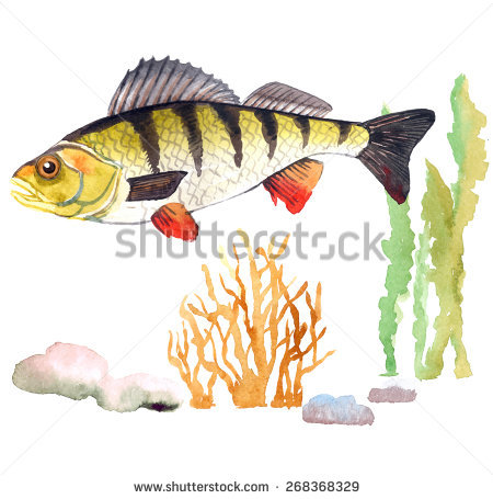 Striped Bass Fishing Stock Photos, Royalty.