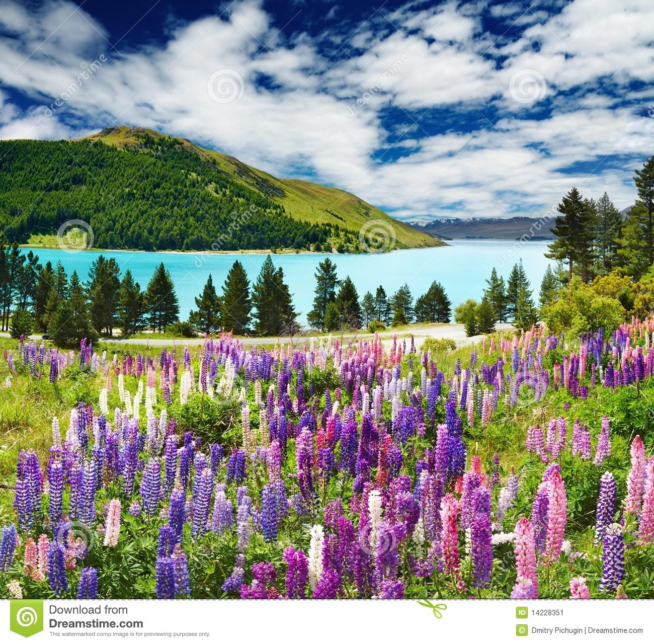 Lake Tekapo, New Zealand Stock Image.