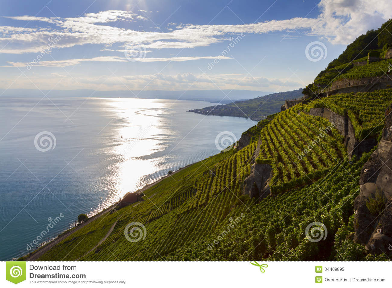 Leman Lake. Terrace Vineyard In Lavaux Region, Switzerland Royalty.