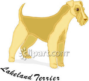 Labeled_Lakeland_Terrier_Royalty_Free_Clipart_Picture_090127.