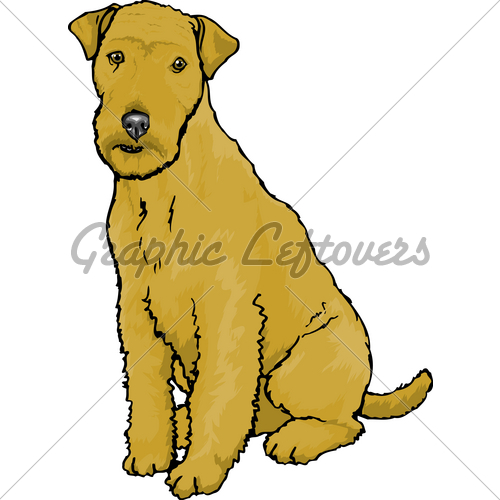 Lakeland Terrier · GL Stock Images.