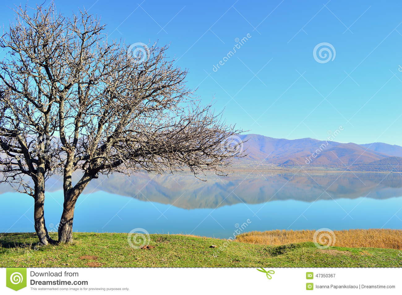 Bare Pear Tree And A Lakescape Stock Photo.