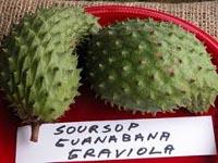 Graviola/Soursop health benefits and medicinal uses.