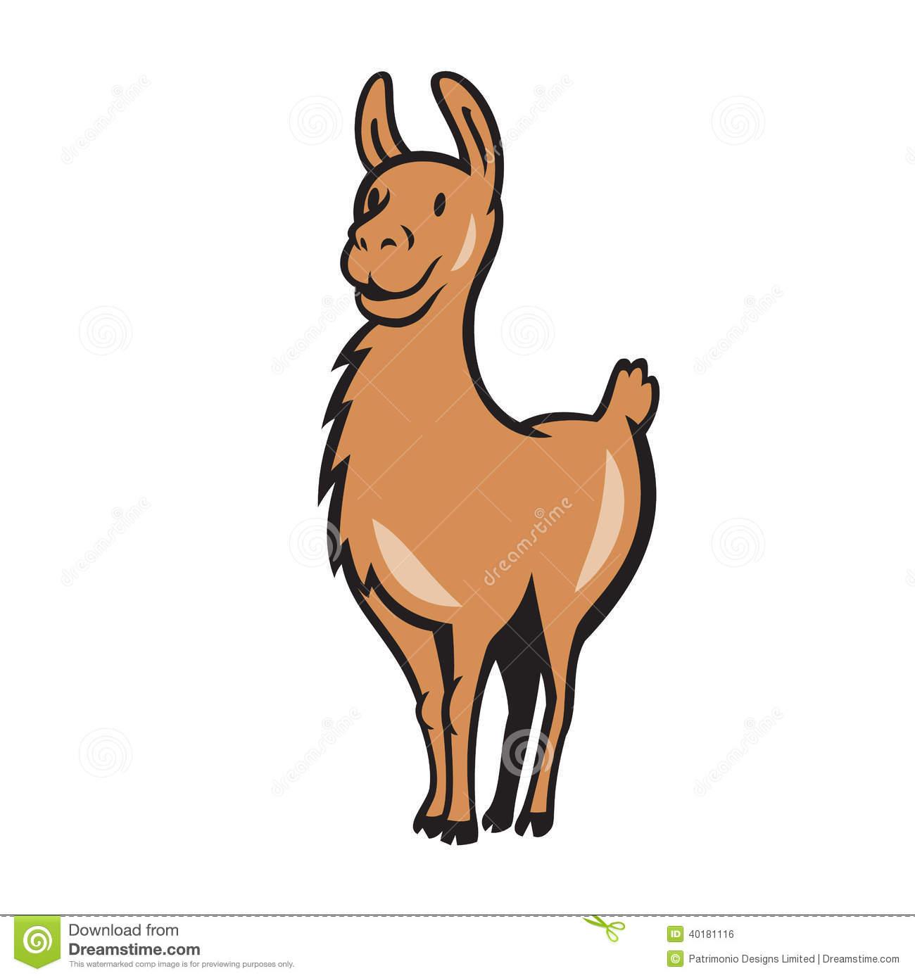 alpaca lama bald