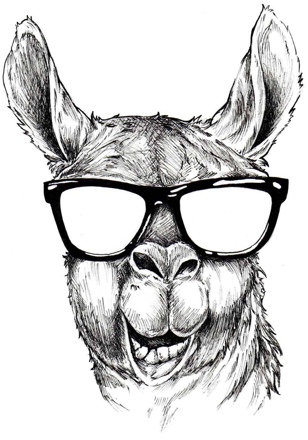 Llama head clipart.