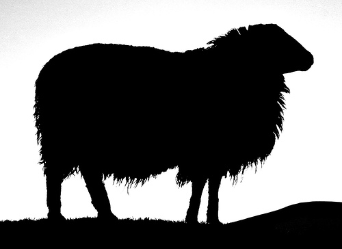 Image of Black Sheep Clipart #4872, Sheep Silhouette.
