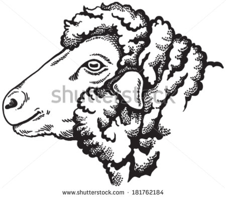 Sheep Face Stock Images, Royalty.