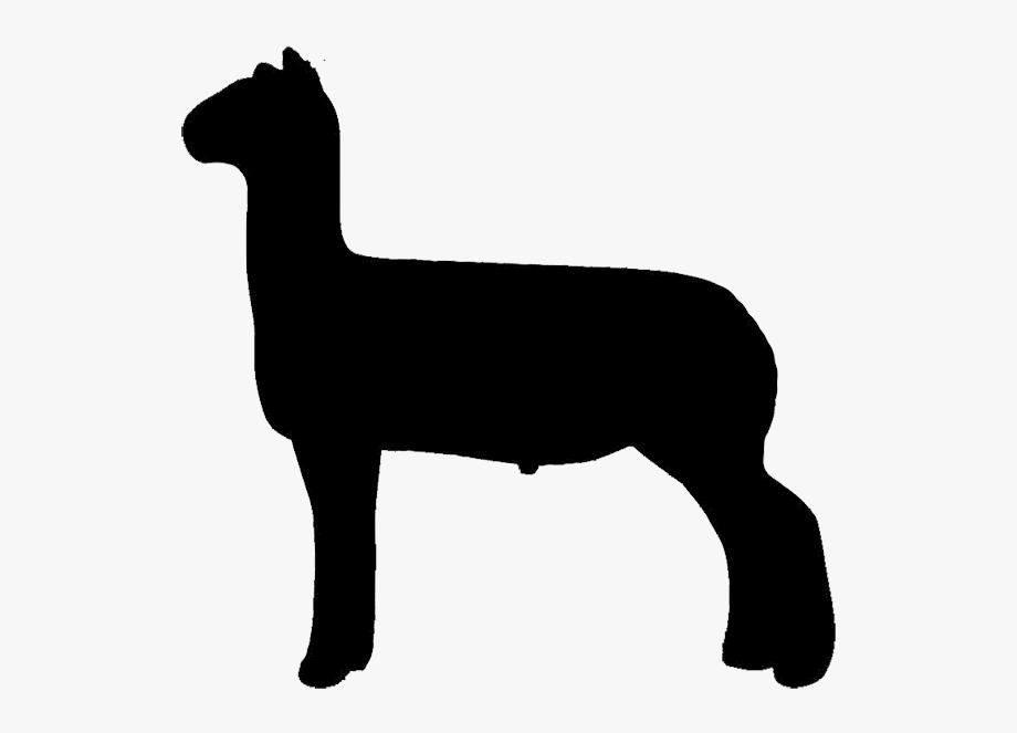 Free Show Lamb Clip Art Sheep Graphics Clublamb Images.