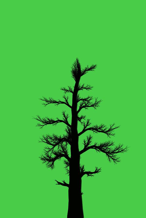 Tree Artwork Pictures.
