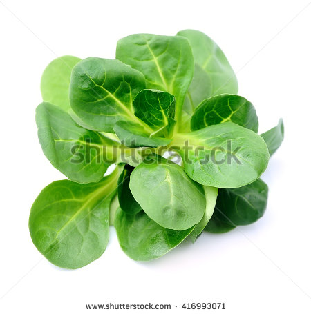 Lambs Lettuce Stock Images, Royalty.