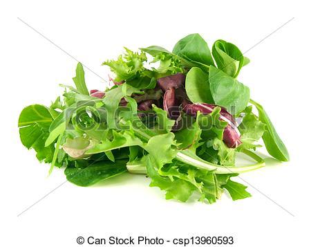 Stock Photographs of Salad rucola, frisee, radicchio and lamb's.