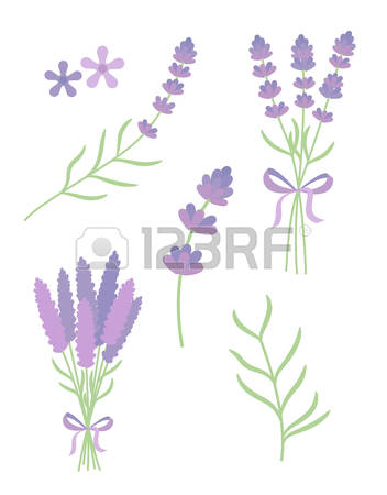 75 Lamiaceae Stock Vector Illustration And Royalty Free Lamiaceae.