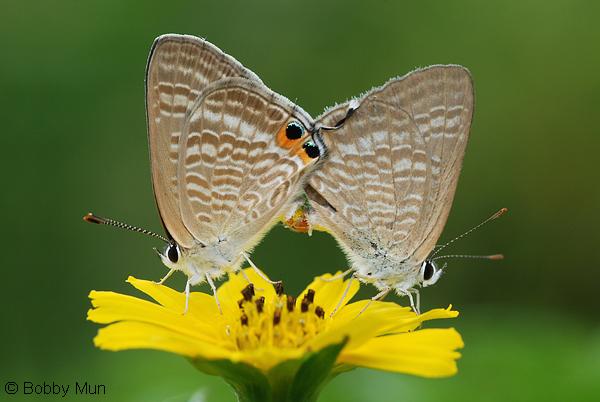 ButterflyCircle Checklist.