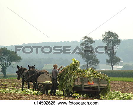 Stock Images of Lancaster County, PA, Pennsylvania, Amish, farming.