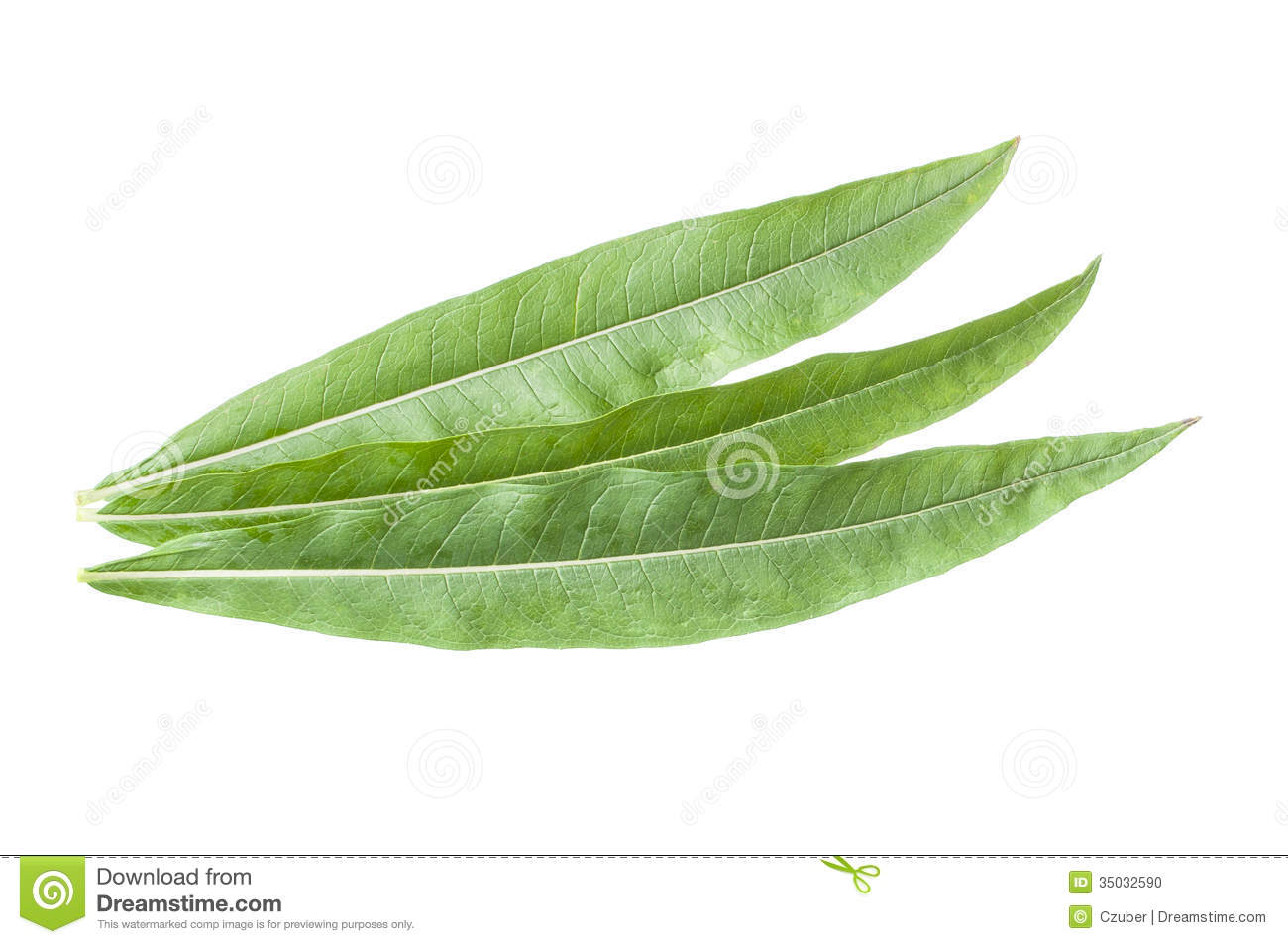 Fireweed Leaves Stock Photo.