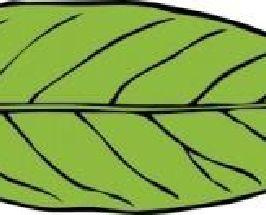 Lanceolate Leaf clip art.