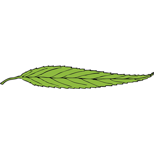 lanceolate leaf clipart, cliparts of lanceolate leaf free download.