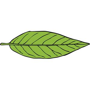 lanceolate leaf 2 clipart, cliparts of lanceolate leaf 2 free.