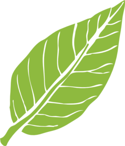 Lanceolate Leaf 3 Clip Art at Clker.com.