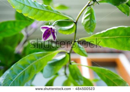 """small Sun Flower"""" Stock Photos, Royalty."""