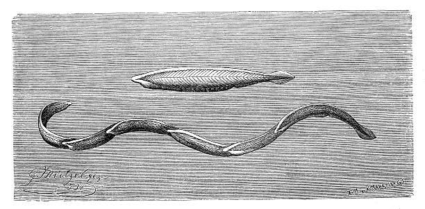 Cephalochordate Clip Art, Vector Images & Illustrations.