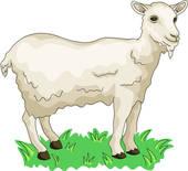 Clipart of fortune, vertebrate, sheep, land animal, mammal, zodiac.