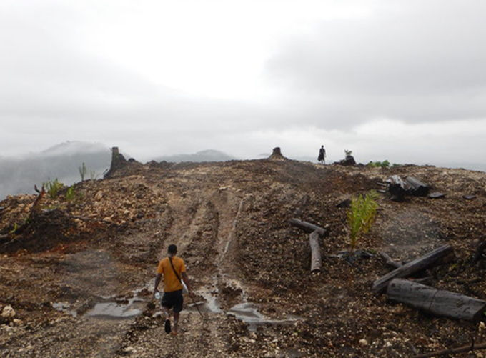 NGOs accuse PNG government of foreign logging land grab.