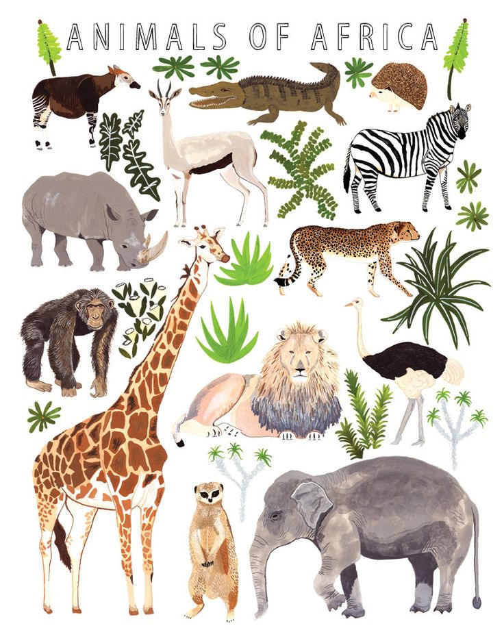 1000+ images about African Animals on Pinterest.