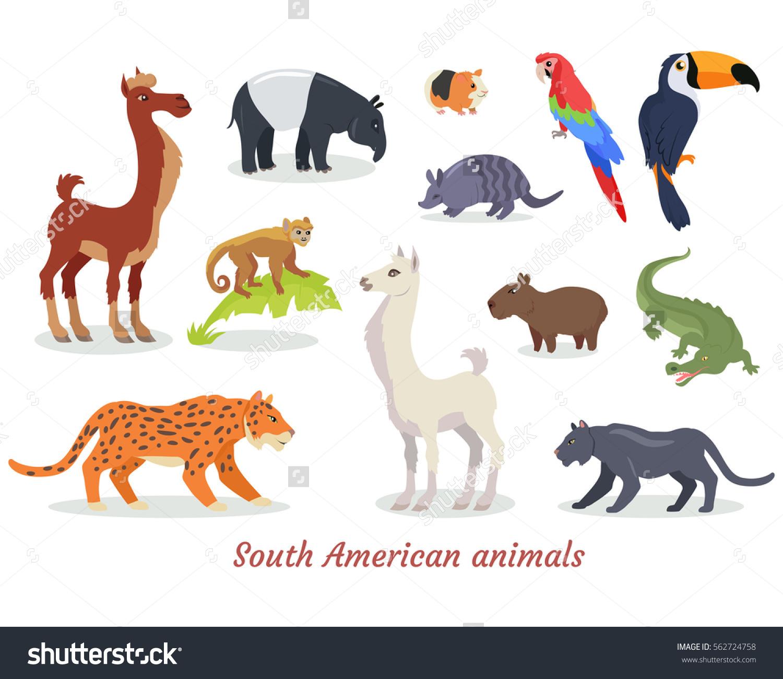 Collection South American Wild Animals Cartoon Stock Vector.