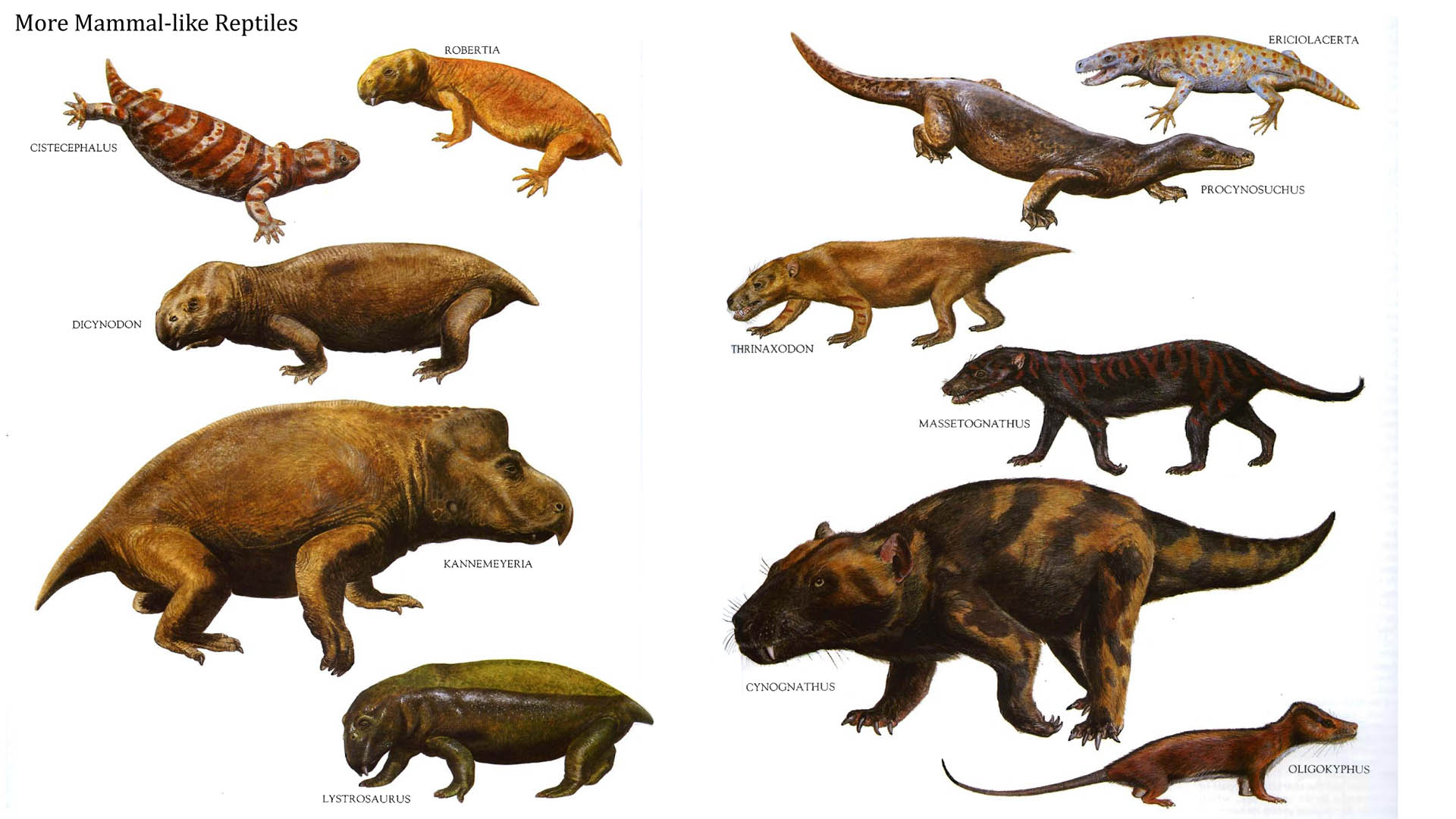 1000+ images about Prehistoric Animals on Pinterest.