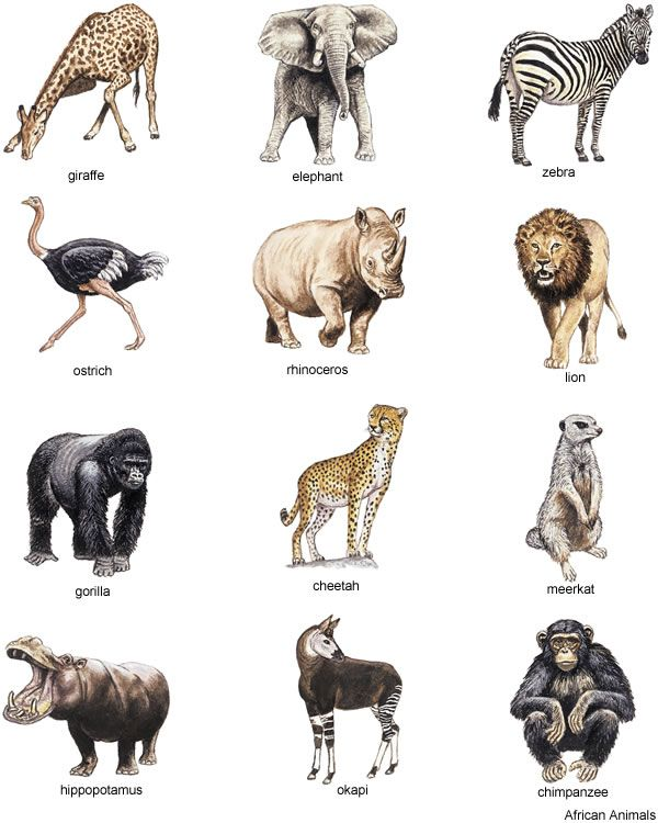 Afica Animals Clipart Clipground