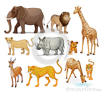 Six Different Kinds Of Animals Stock Images.