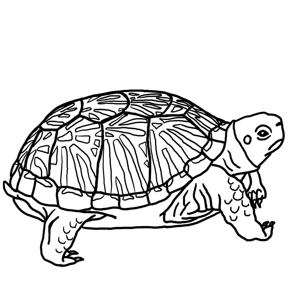 Turtle Book Club (@turtlebookclub).